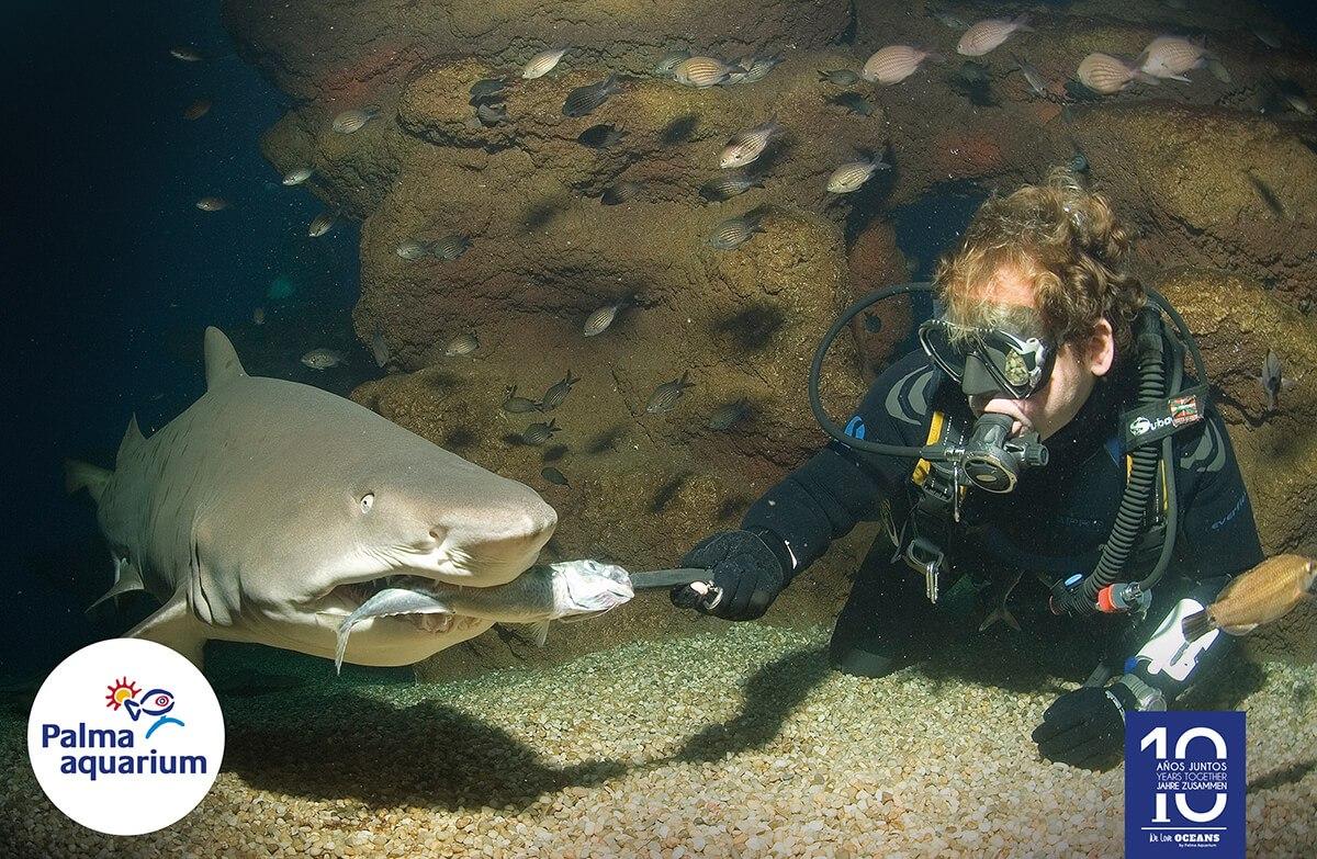 actividades palma aquarium