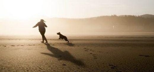 playas perros mallorca